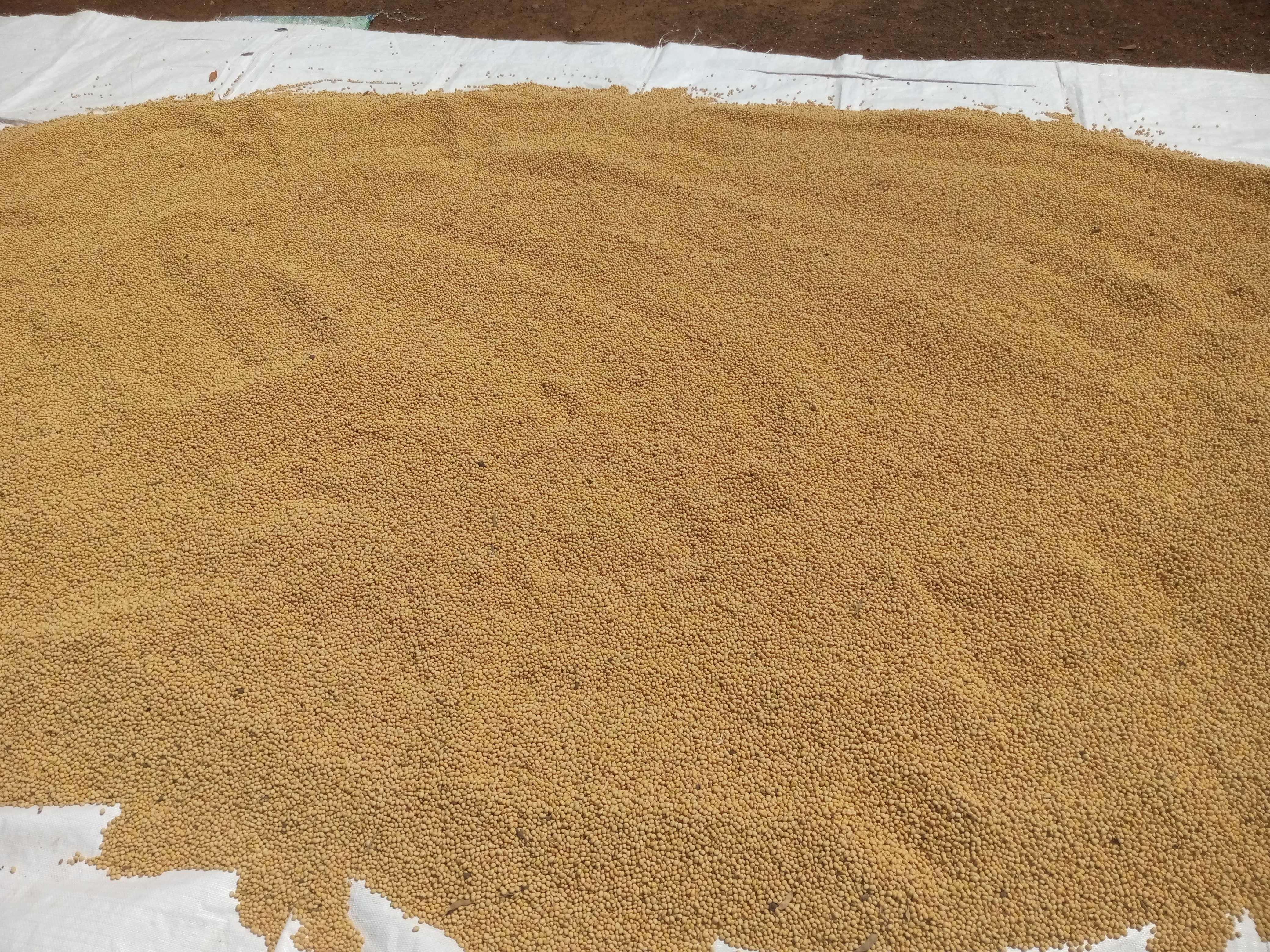 LA PROBLÉMATIQUE DE LA CONSERVATION DES PRODUITS AGRICOLES ET AGRO ALIMENTAIRE