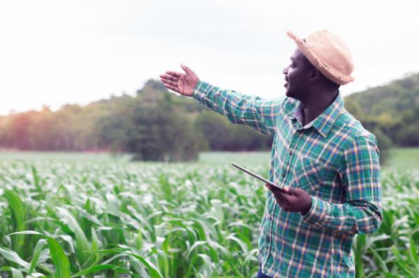 Togo : un projet d'investissements agricoles massifs en 2021