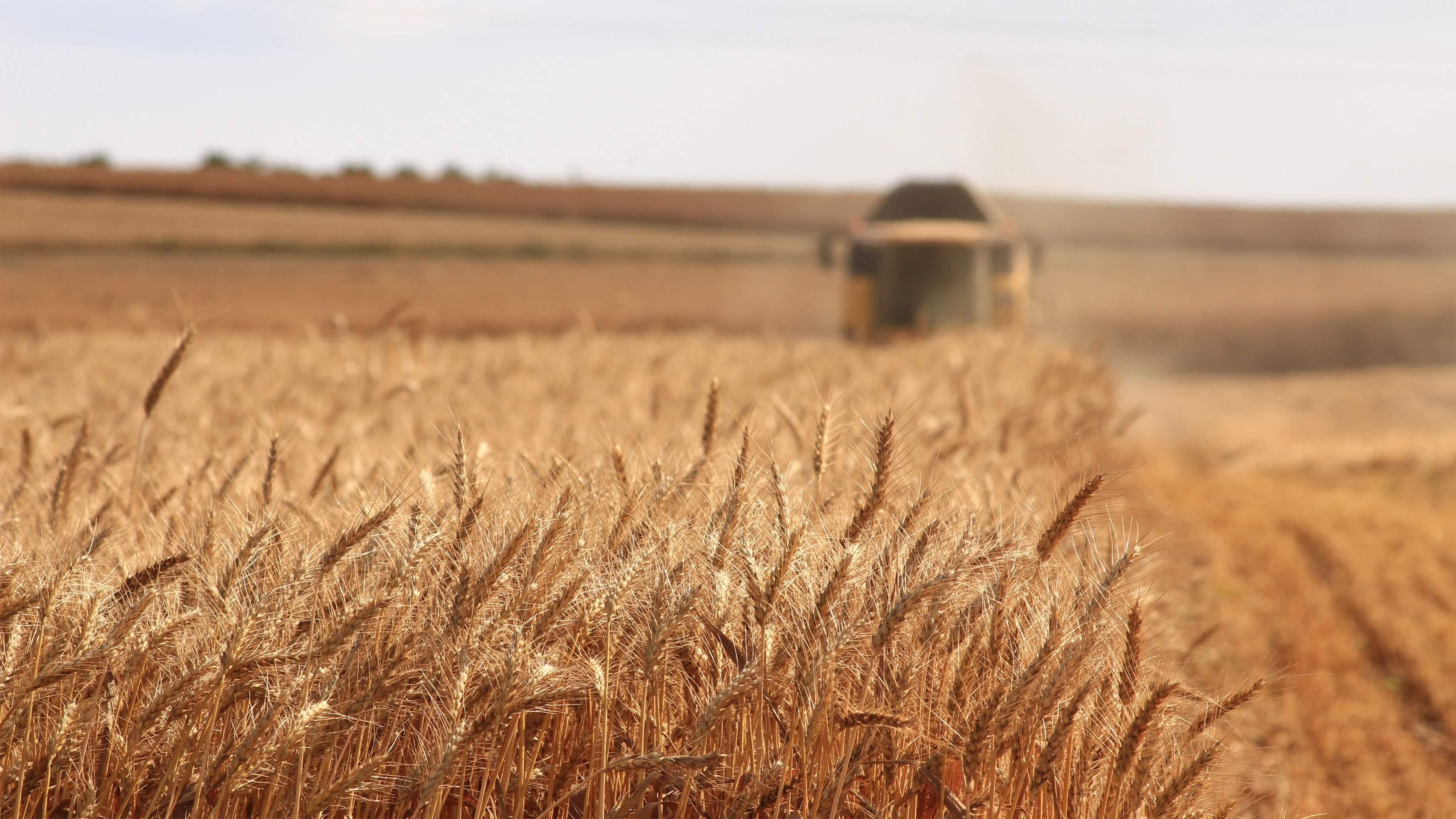 Campagne cultures fourragères 2019/2020: Maïs, tournesol et soja en progression, betterave en baisse