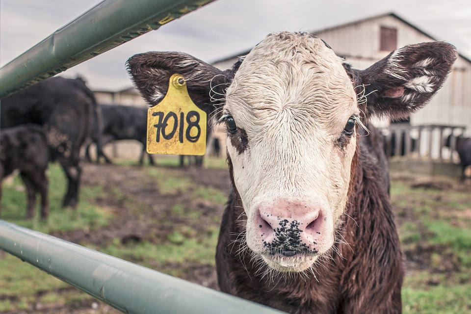 Les éleveurs demandent plus de concret aux distributeurs