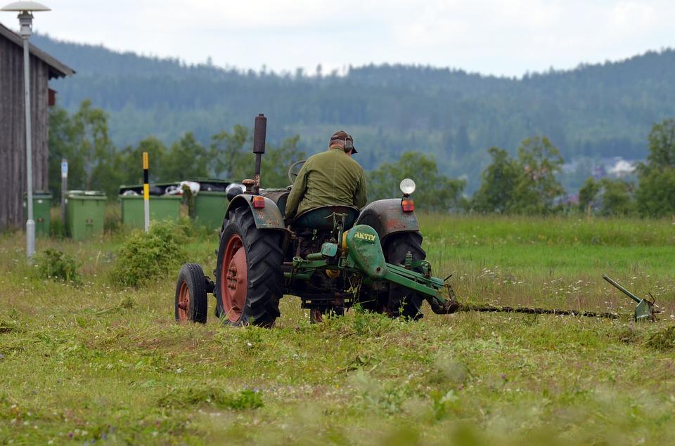 Elevage: À quel moment faucher l'herbe qui servira de foin?