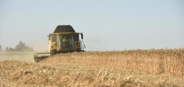 Maïs et blé fragilisés par les tensions sino-américaines