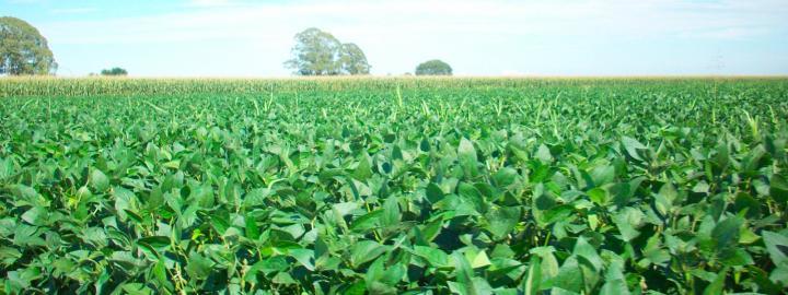 Le soja progresse encore grâce à de nouvelles ventes