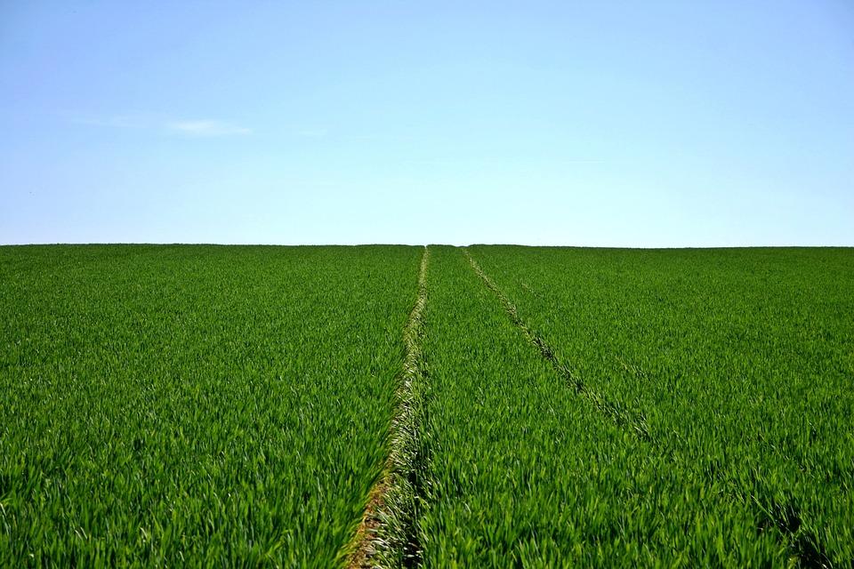 L'après-Covid-19 agricole sera-t-il si différent du monde d'avant ?