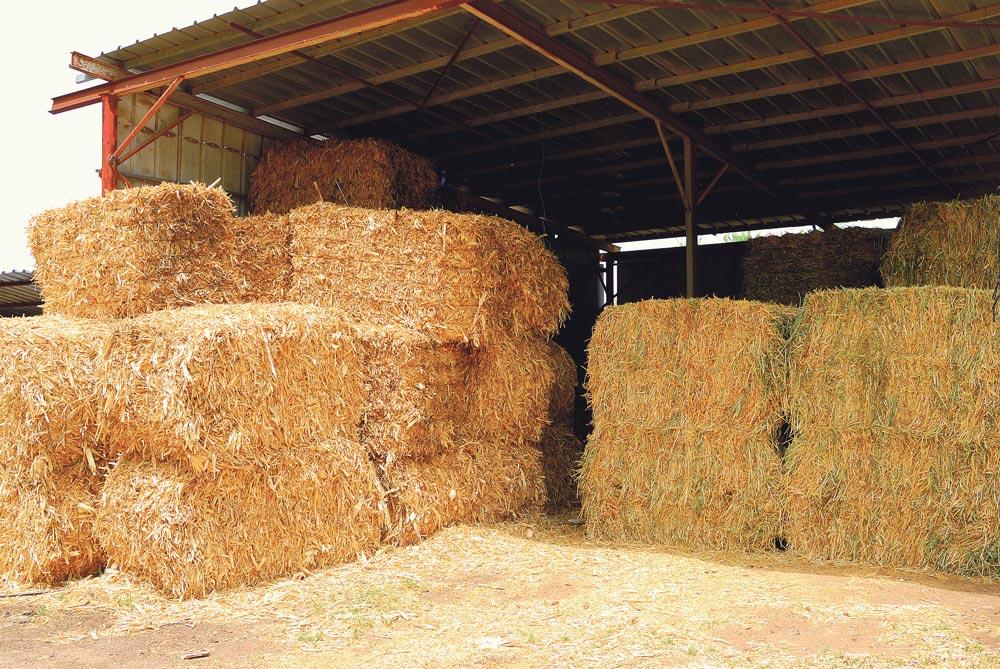 Échauffement des fourrages : Mieux comprendre le mécanisme de fermentation et d'échauffement