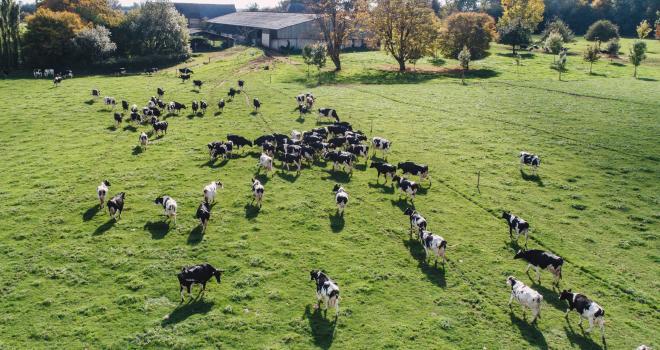 Les éleveurs de ruminants unis contre « la folie libre-échangiste »