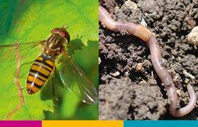 Connaître la biodiversité utile à l'agriculture