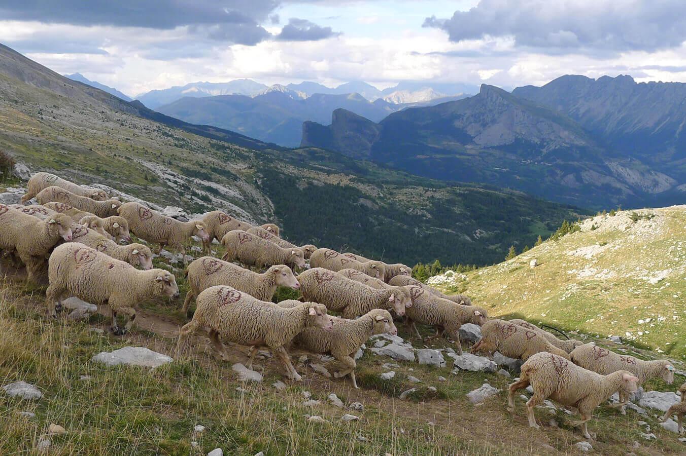 Le pastoralisme