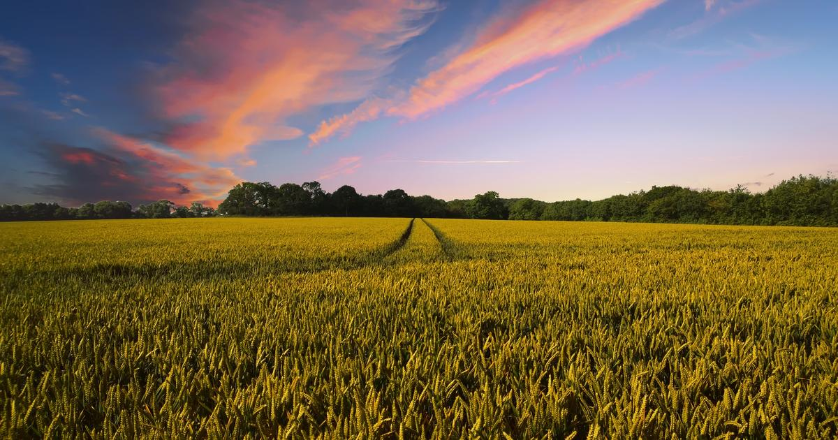 Une Europe agro-écologique en 2050