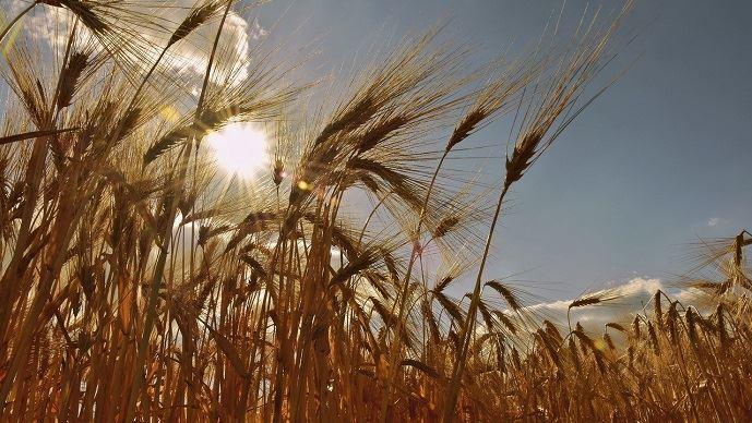 À quoi s'attendre au niveau du stress hydrique des plantes?