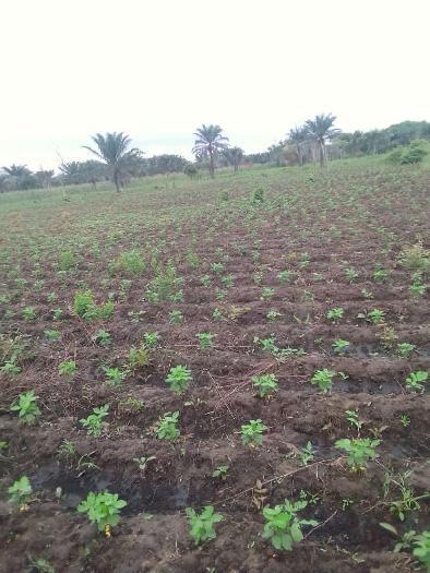 Soycain Benin et GDAD-ONG