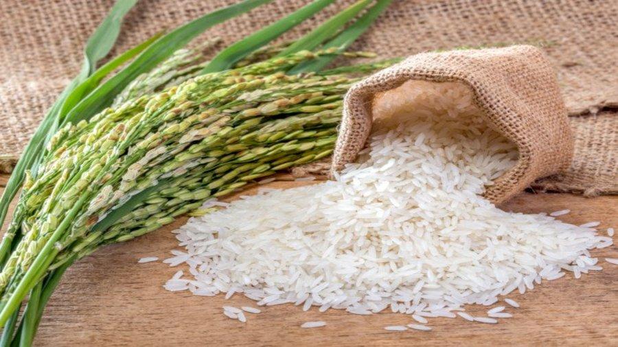 Investissement agricole: La filiale nigériane du groupe émirati Stallion, Popular Farms and Mills Limited, investi au Nigeria pour booster la filière du riz et sésame