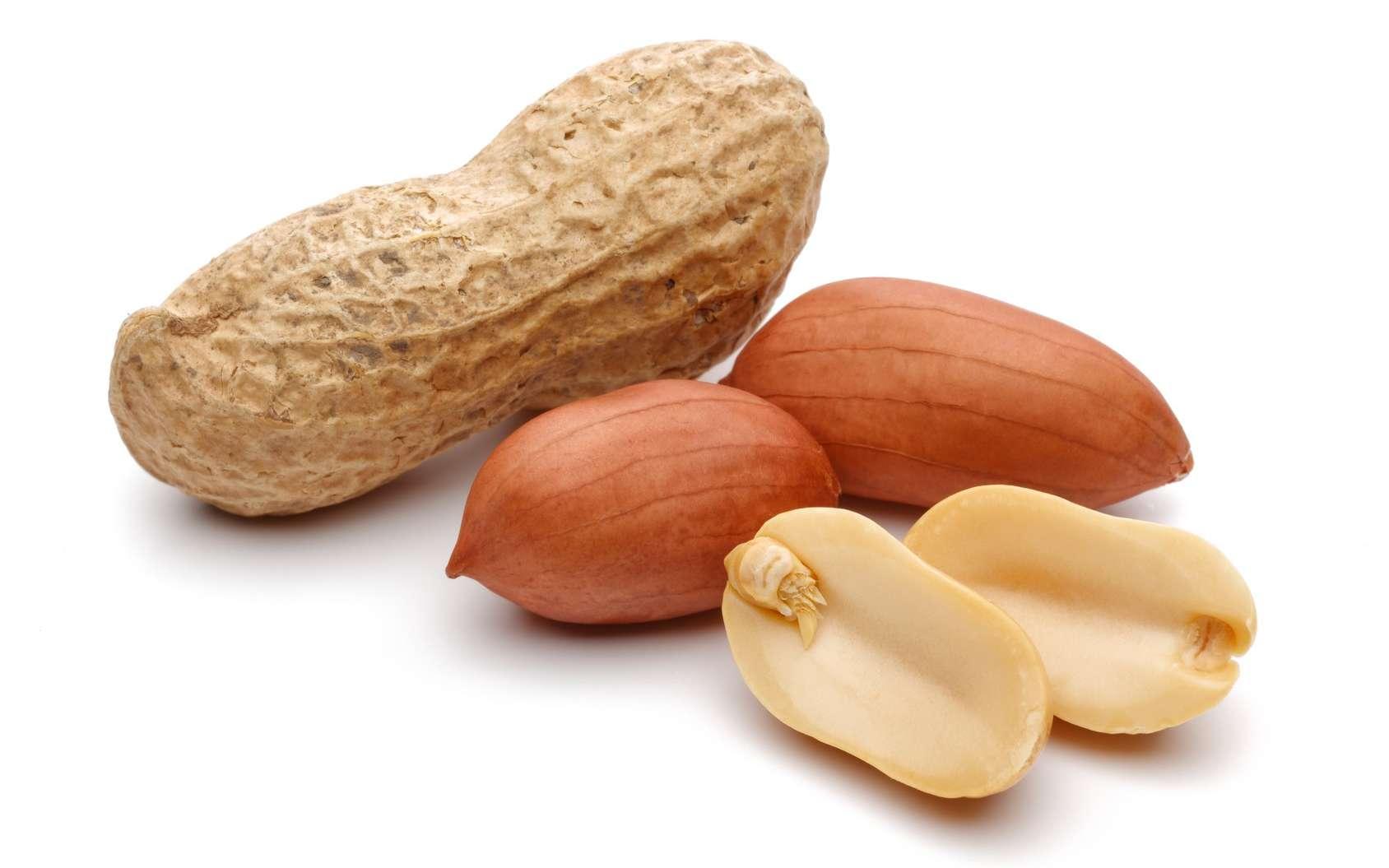 L'arachide au Sénégal:  La SONACOS  finance la campagne arachidière 2019/2020