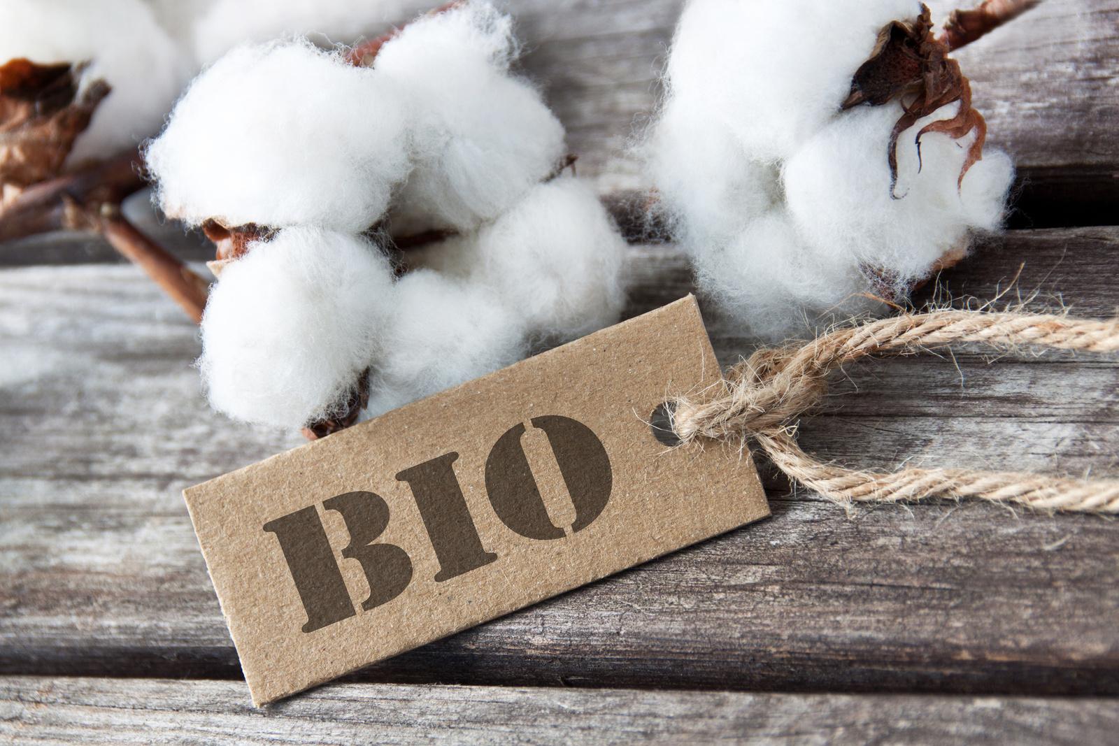 Coton biologique: La production mondiale de coton biologique a fait un bond de 56%