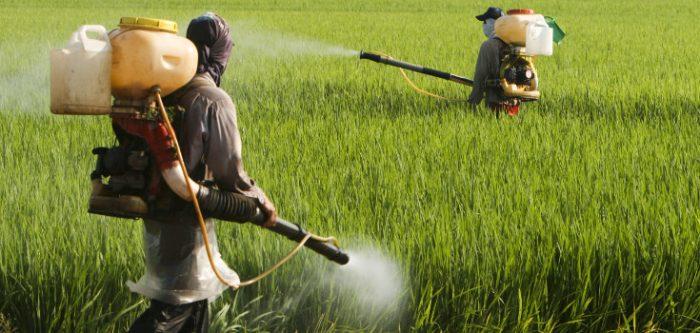 Le glyphosate; est-ce un danger pour l'agriculture en Afrique?