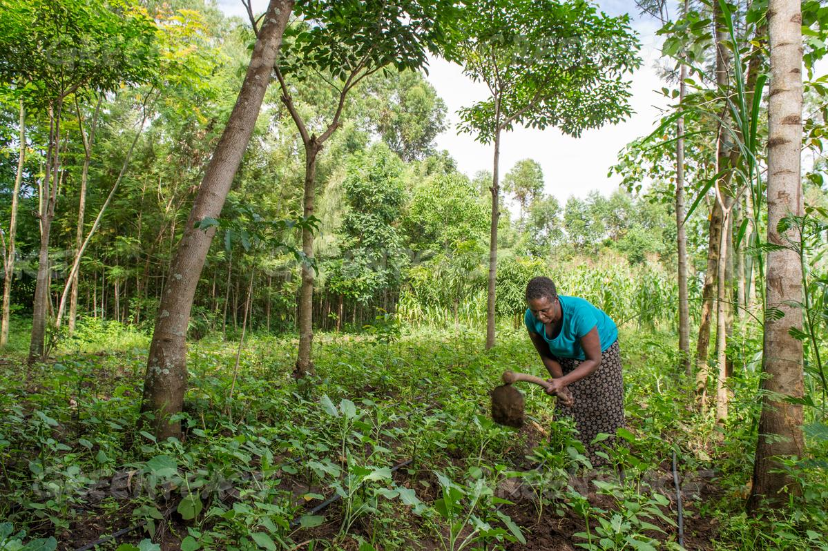 Au Sénégal, pour la campagne 2020/21 la priorité sera  faite aux cultures vivrières avec un budget augmenté de 50%