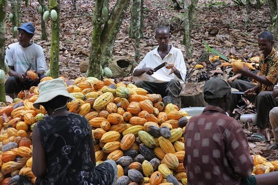 Les entreprises mondiales de cacao et de chocolat portent assistance aux producteurs pour riposter contre le Covid-19