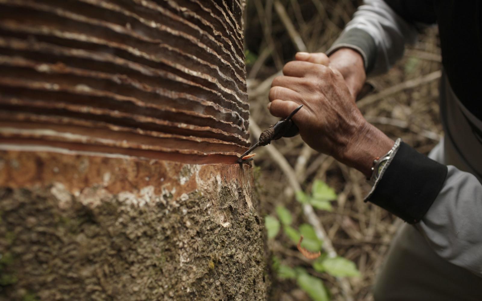 La Chronique des  Matières Premières Agricoles: Le caoutchouc au 4 mai 2020