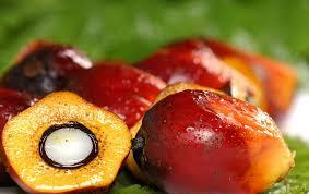 La Chronique des  Matières Premières Agricoles: L'huile de palme au 4 mai 2020