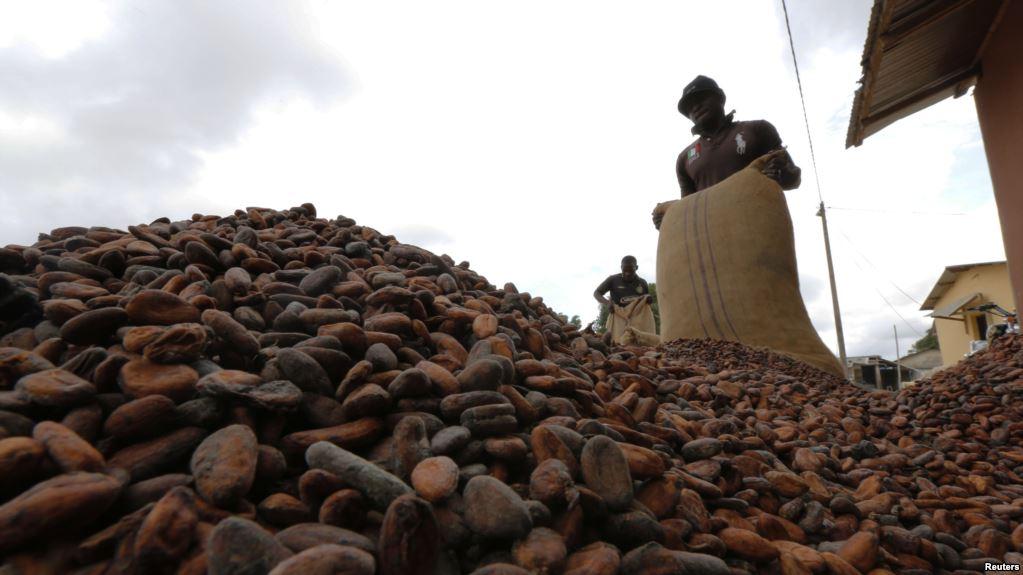 Le différentiel d'origine sur le cacao va peut-être changer en Côte d'Ivoire