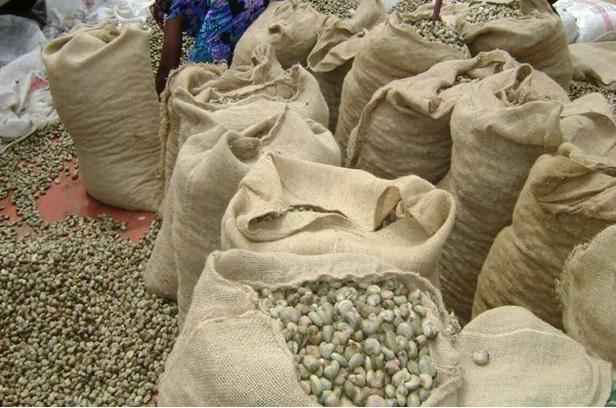 Les filières anacarde et coton en Côte d'Ivoire se préparent à une perte de recettes à l'exportation