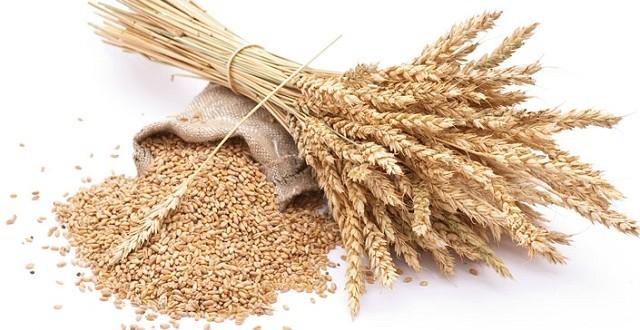 Le marché mondial du blé s'est agité, mais l'Egypte reste confiant