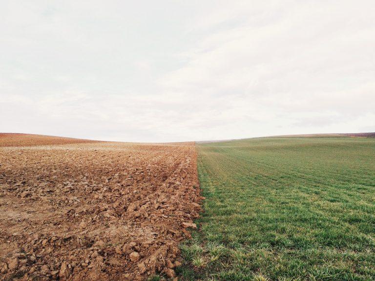 Diaspora et investissement agricole: Un site de 5000 hectares mis à la disposition de la diaspora malienne