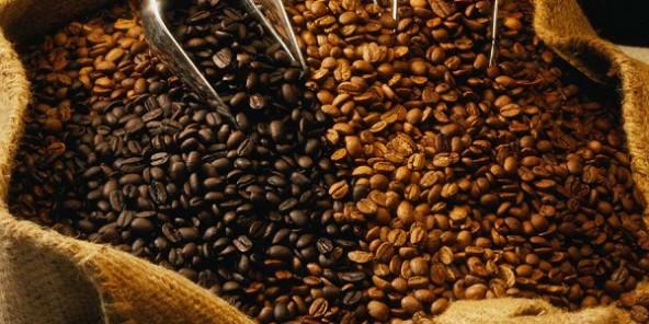 Le café Robusta à l'export est-il resté dynamique ?