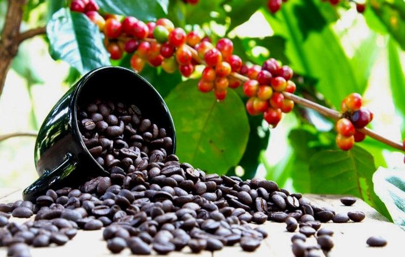 La Chronique des matières premières agricoles: Le café au 8 mai 2020
