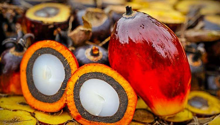 La Chronique des matières premières agricoles: L'huile de palme au 8 mai 2020