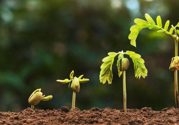 Formation agricole: Un programme de formation d'agroforesterie communautaire au Sénégal