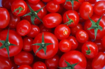 S'affranchir des importations de concentrés de tomate et d'impulser le développement de l'industrie locale de transformation; c'est le choix du Nigéria