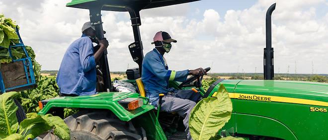 Un vif plaidoyer lancé  en faveur d'une plus grande prise en compte de l'agriculture en Afrique le cadre de la riposte à la Covid-19