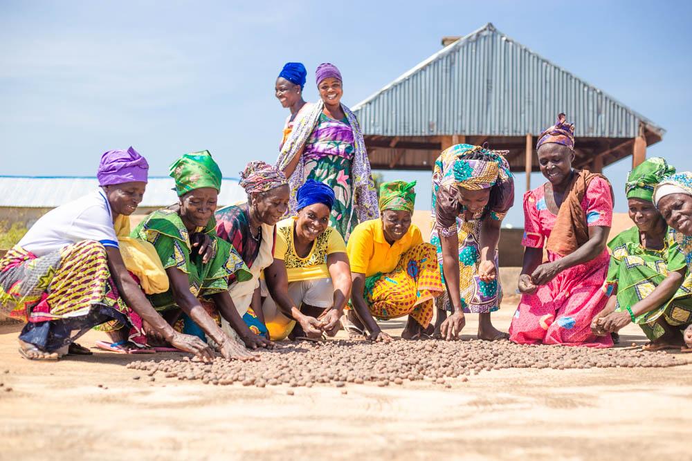 Exploitation de la filière karité en Afrique: Une production fortement concentrée