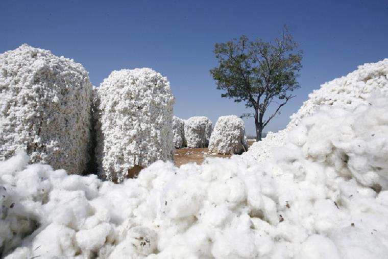 La production de coton au Togo a chuté de 15% en 2019/20