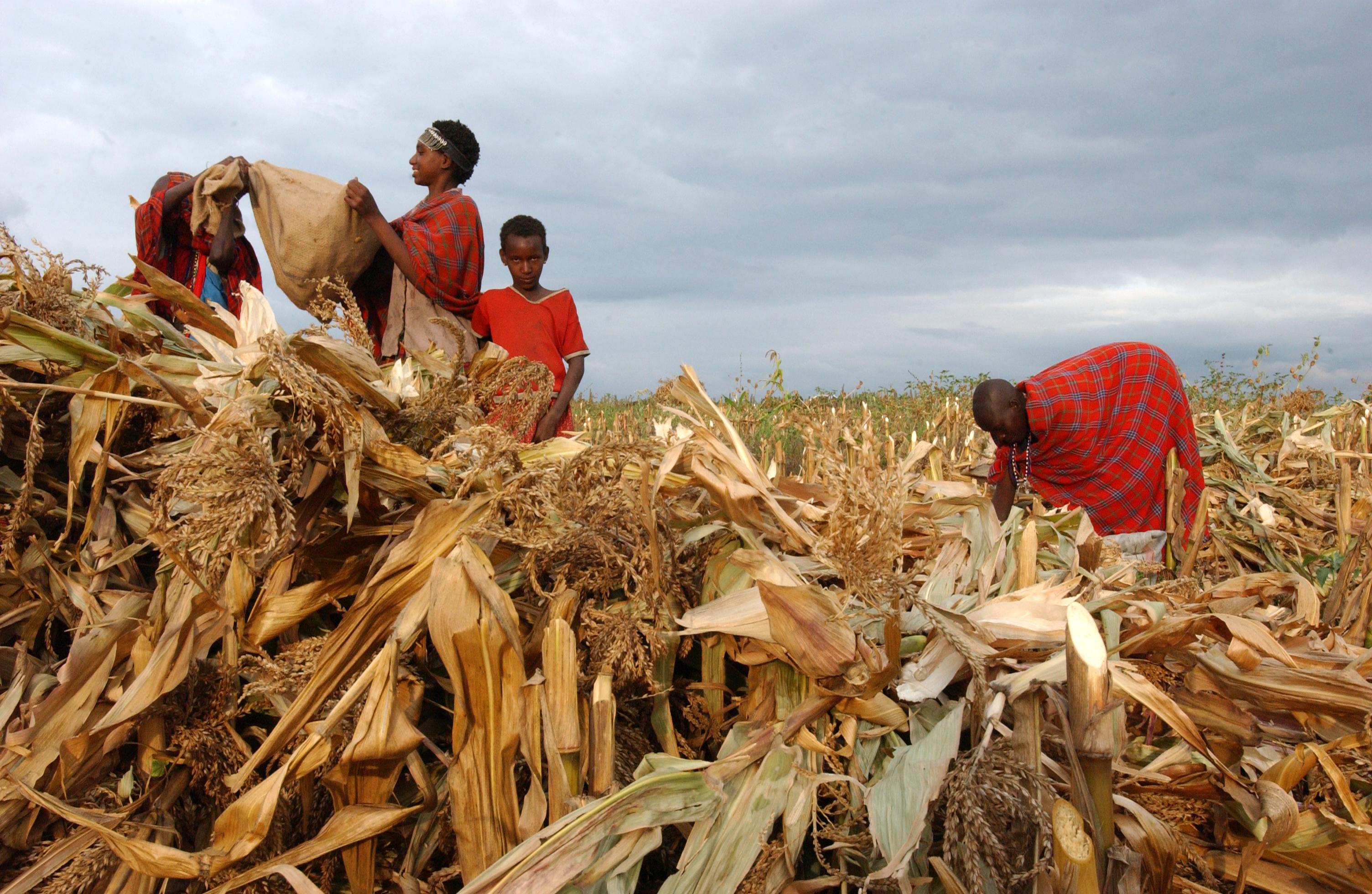 Financement agricole au Kenya: Apollo agriculture va aider encore plus les petits exploitants agricoles du Kenya à maximiser leurs revenus