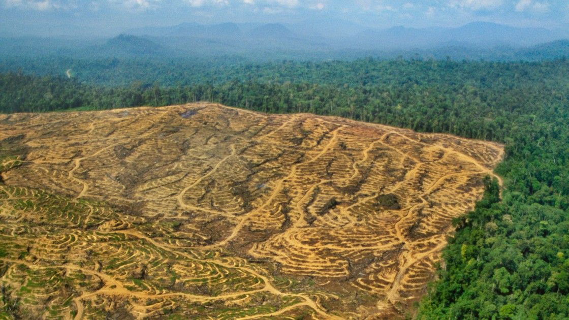 Filière cacao: Où en est l'Initiative Cacao et Forêts (ICF)?