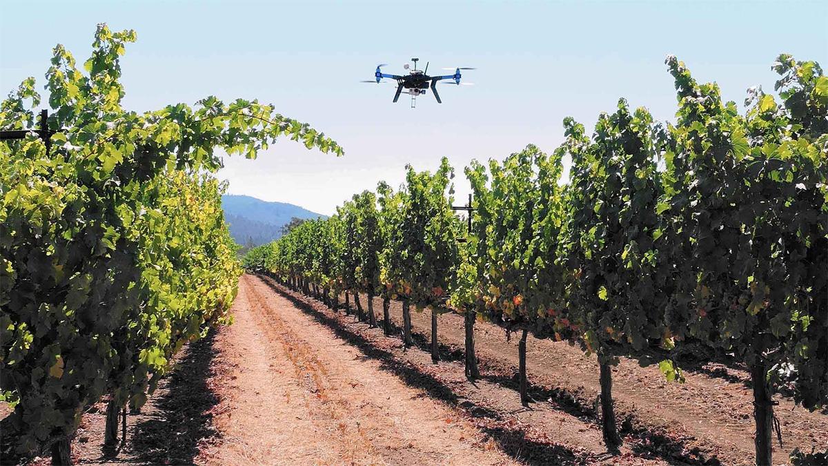 Investissement dans l'agrotechnologie en Afrique du sud