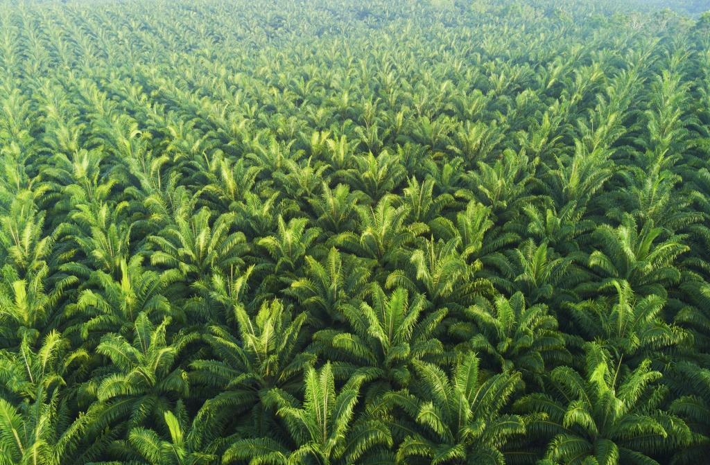 Chronique des matières premières agricoles: L'huile de palme au 21 mai 2020