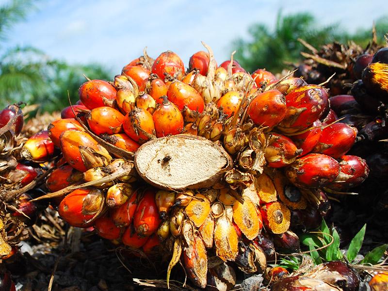 Chronique des matières premières agricoles: L'huile de palme au 28 mai 2020
