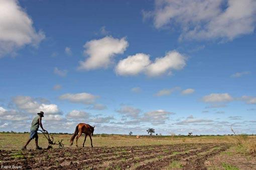 Au Sénégal le budget alloué pour la campagne agricole 2020/21 tonifié de 20 milliard FCFA