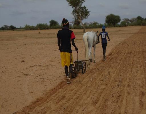 Les échos de la nouvelle campagne agricole 2020/21 au Burkina Faso
