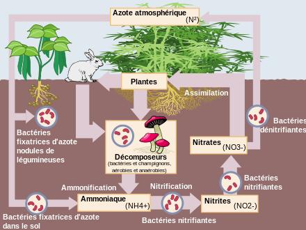 Quelle est la part d'utilisation de l'azote par rapport au phosphate et à la potasse en Afrique de l'Ouest ?