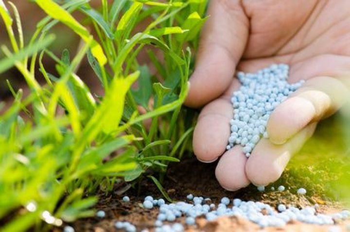 Utilisation des engrais azotés: L'alimentation azotée des plantes