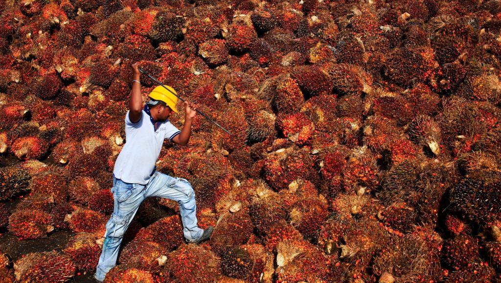 [Chronique] Les matières premières agricoles: Le coton au 4 juin 2020