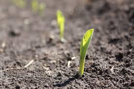 Sols et engrais: Nouvelles options pour des sols en bonne santé