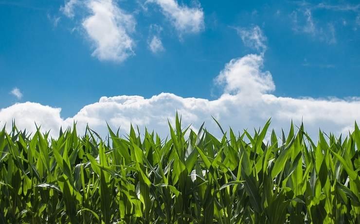 Agriculture de demain: Produire plus avec moins en pratique