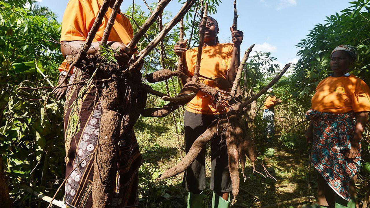 Impact de la COVID-19 sur la production alimentaire en Afrique de l'Ouest