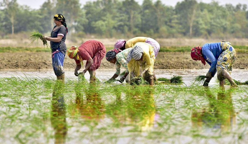 La pandémie mondiale de COVID-19 et ses répercussions sur le secteur agricole