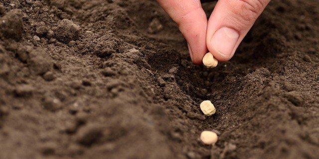 Les impacts de la COVID-19 sur la production agricole en Afrique: Difficultés dans l'approvisionnement en intrants